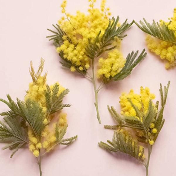 Cartable responsable - Mimosa, Collection méditerranée